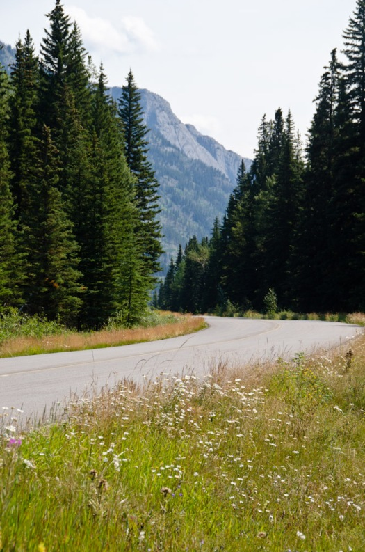 The Bow Valley Parkway